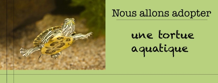 Nous allons adopter un animal decompagnie.